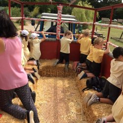 Year 1 Trip to Rare Breeds Centre