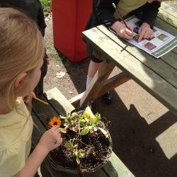 Exploring plant types